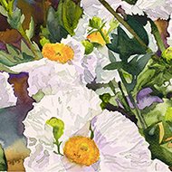 Matilija Poppies No 7