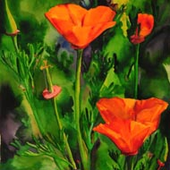 Poppies No 15